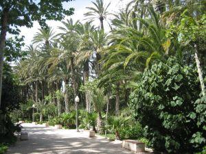 800px-Elche_-_parque_municipal1